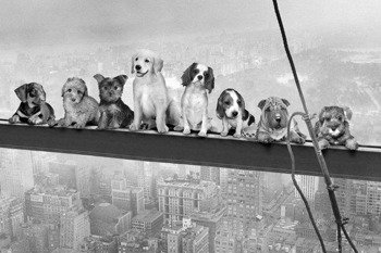 plakat DOGS ON GIRDER