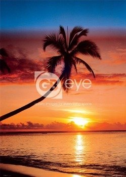 plakat SUNSET AND PALM TREE