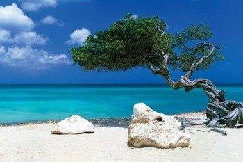 plakat TOM MAKIE - DIVI DIVI TREE