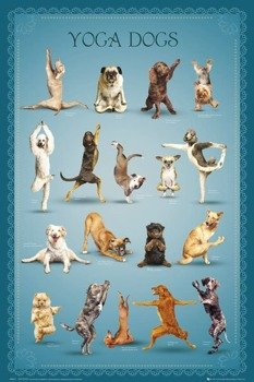 plakat YOGA - DOGS 2