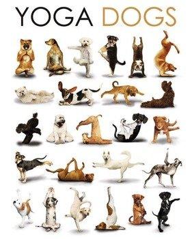 plakat YOGA - DOGS COMPILATION