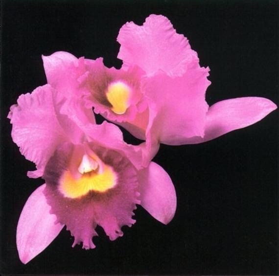 OPETH: ORCHID (2LP VINYL)