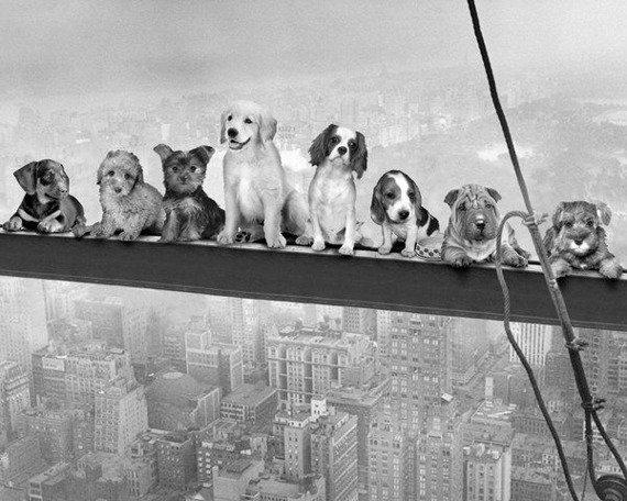 plakat DOGS ON GIRDER