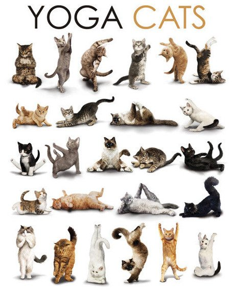 plakat YOGA - CATS COMPILATION